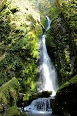 Soda Creek Falls (dsgetch) Tags: cascadiastatepark sodacreekfalls sodacreek waterfalls waterfall mossyrocks mossy moss cascades cascadia pnw pacificnorthwest pnwlife oregon willamettevalley linncounty