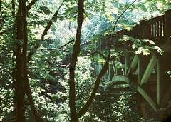near latourell falls (a perhaps hand) Tags: polaroidlandcamera polaroidcamera instantcamera fujifp100c instantfilm bleachednegative nature trees bridge columbiagorge oregon