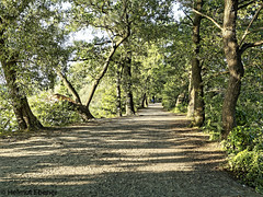 BS-Riddagshausen, Naherholungsgebiet (bleibend) Tags: 2018 bs bsriddagshausen riddagshausen naherholungsgebiet naherholung naturschutzgebiet nature natur omd em5 olympus olympusomd olympusem5 mft m43 m43cameras