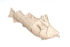 Atlantic Cod (folding~well) Tags: origami fish paper folding cod saithe kohler
