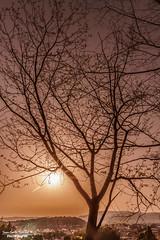 Sunset in Kyoto (Juan C. Sánchez Photography) Tags: japón japon japanese japan trees tree sungod sunset sun sunrise sunshine landscapes landscape arbol paisaje naturaleza naturallight natural nature sky sepia sol soleil cielo allnaturesparadise paradise kyoto traveler travel vacations sony sonya6500 sonyalpha photography ñho outdoorphotography photographer panorama