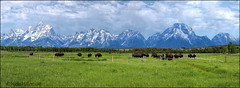 Where the Buffalo Roam... (DJFan) Tags: bison panorama tetons mountains meadow wyoming clouds scenic