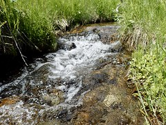 Take Me to the River (Oldman Watershed) Tags: takemetotheriver ncc watershed event