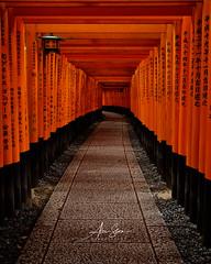 The Magnificent Torii Gates at Fushimi Inari Shrine (Kyoto, Japan 2015) (Alex Stoen) Tags: alexstoen alexstoenphotography canoneos1dx ef2470mmf28liiusm fushimiinarishrine geotagged japan mountinari ngexpeditions natgeo nationalgeographicexpeditions travel vacation vermiliontoriigates