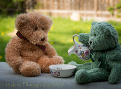 It's So Hot Today (HTBT) (13skies) Tags: fresh freshinup pouring waterjug gerrie huntley hot heat sunny uncomfortable temperature coolingoff teddybeartuesday waiting happyteddybeartuesday timely water cool backyard summer daytime daylight sonya99 friends buddies pals mates