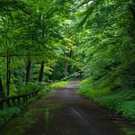 Abandoned road through Braddock's Trail Park thumbnail