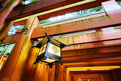 Fushimi Inari Taisha (Bill Thoo) Tags: 伏見稲荷大社 京都市 日本 18mm batis zeiss ilce7rm2 a7rii sony serenity peaceful travel scenic fox shinto lantern gates shrine temple nippon japan kyotoshi kyoto taisha inari inaritaisha fushimi fushimiinaritaisha