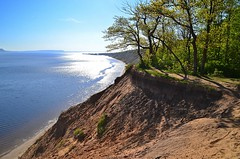 Krummholz on the sandy cliff (МирославСтаменов) Tags: russia togliatti volga river sand terrace edge oakery ripple horizon forest overlook tree krummholz