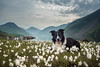 22/52 Lay ee odl lay ee odl lay hee hoo (JJFET) Tags: 22 52 weeks for dogs paddy border collie wastwater mountain