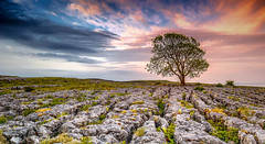 LoneTree Malham (deanallanphotography) Tags: rural tree field landscape green panorama nature sky colors stone rock view sunrise texture outdoor creativephotocafe infinestyle anawesomeshot over excellence impressedbeauty flickrsbest fab expression supershot uk england yorkshire artisticexpression spring nikon ngc outdoors photography colour limestone britain scenic greatbritishlandscape travel