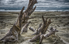 Waiting for High Tide (TCeMedia/Telecide) Tags: ocean sea sand nature beach driftwood surf clouds pacific newport oregon or