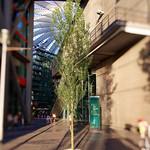 Einsamer Baum im Sony Center thumbnail