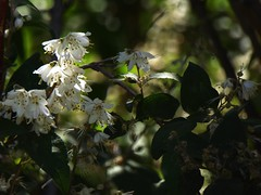 penombra fiorita (fotomie2009) Tags: flower fiore flora white