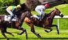 the battle (Guy Goetzinger) Tags: goetzinger nikon d850 aarau pferderennen 2018 race horse cource cheveaux jockey winner sport horcerace jagdrennen outdoor duell battle