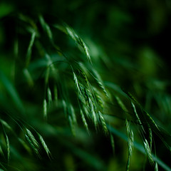 Forest Grass 020 (noahbw) Tags: captaindanielwrightwoods d5000 dof nikon abstract blur depthoffield forest grass natural noahbw shadow spring square woods
