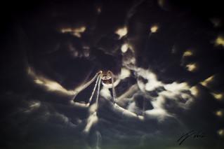 Spiderescence (?)
