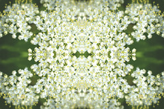 Psychadelic I (Alexander Day) Tags: distoroted flower flowers duke farms new jersey nikon d3300 alex alexander day