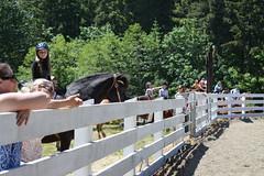 DSC_4081 (Primespot Photography) Tags: show horseshow horse horses game games horsegames flag