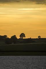 One tree hill (Tranquility Rose) Tags: rutlandwater rutland sunset cloudsstormssunsetssunrises orange