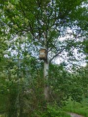 Beehive(?) (arrowlakelass) Tags: bee hive p1180195