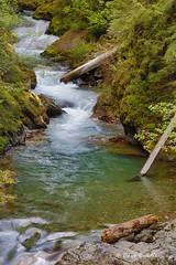 Creek in the forest (littlebiddle) Tags: mtrainiernationalpark water waterfall flowing