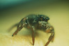 (Lettich) Tags: spider arachnid insect animal nature macro nikon d50