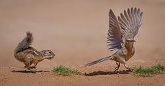Startled-4884 (Eric Gofreed) Tags: arizona elephantheadpond
