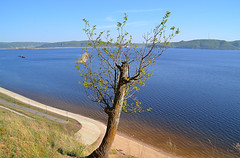 "A woody ""deer"" (МирославСтаменов) Tags: russia togliatti volga river oak crown branch trunk overlook coast cliff edge"