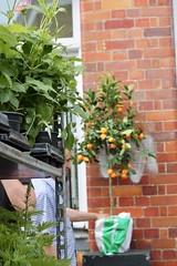 Columbia Road (soleneelle) Tags: flowers flower market sunflower hortensia orange london road columbia lavender