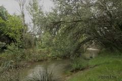 Huerva (Otra@Mirada) Tags: muel río huerva zaragoza aragón agua árbol campo rural