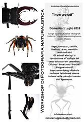 """Workshop """"Invertebrati"""" (Federico Crovetto - www.federicocrovetto.it) Tags: workshop macrofotografia corso workshopfotografico corsodifotografia invertebrati"""