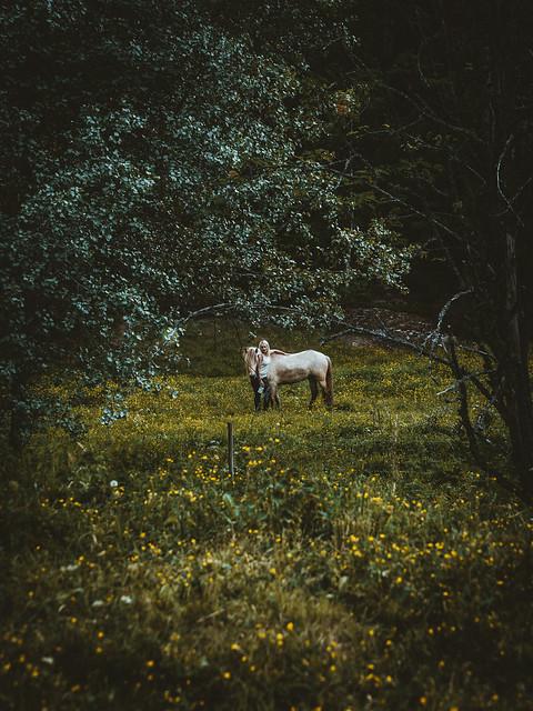 Horseback riding in Norway