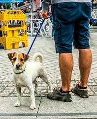 What ? (denise.ferley) Tags: norwich thisisengland uk oneaday dogslife walkingthedog citylife dog streetphotography