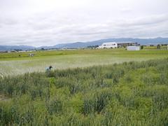 Farming (しまむー) Tags: panasonic lumix gx1 g 20mm f17 asph natural train tsugaru free pass 津軽フリーパス
