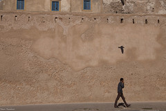 Remparts d'Essaouira 2 (MFChab) Tags: essaouira maroc bleu blue chaux light lumière mouette mur ocre oiseau ombres photo photoderue remparts rue seagull shadow street streetphotography terracotta texture wall