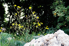 Krk-4809.jpg (harleyxxl) Tags: kroatien staribaska inselkrk starabaška primorskogoranskažupanija hr