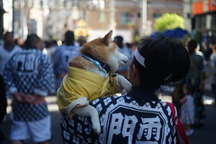20180520_S0257_DR-TessarM50_SonyA7II_Asakusa_JP (*Leiss) Tags: 2018 zeiss drtessar 50mm sonya7ii digital asakusa tokyo japan jp dog