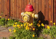 Yellow & Red / Желтое и Красное (dmilokt) Tags: цветок flower желтый yellow красный red dmilokt beginnerdigitalphotographychallengewinner
