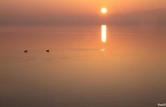 IMG_6526 .... Dolce relax ..... (Betti52) Tags: lago alba paperelle monocromo post02052018