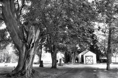 2018-05-30 Grand View Cemetery (04) (B&W)  (2048x1360) (-jon) Tags: anacortes fidalgoisland sanjuanislands skagitcounty skagit washingtonstate cemetery grandviewcemetery mausoleum building office blackwhite bw blackandwhite monochrome road tree a266122photographyproduction