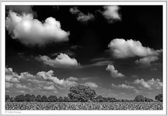 IMGP5129-sw-Rahmen-kl (fredericfromage) Tags: sw bw monochrom landschaft himmel felder wolken münsterland