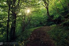 Le avvolgenti luci della faggeta (EmozionInUnClick - l'Avventuriero photographer) Tags: bosco faggeta monteacuto sentiero sole sonya7riii tracieloeterra appenines italy