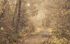 On earthy Hike (Netsrak) Tags: baum bäume eifel europa europe herbst landschaft natur nebel wald autumn fall fog landscape mist nature woods