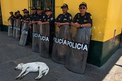 Lima, Peru. December 2016 (Victor M. Perez) Tags: leicaq leica streetphotography dog policia police losandes latinamerica southamerica peru lima