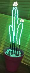 2018-06-05 PS Burner Meetup (113) (MadeIn1953) Tags: 2018 201806 20180605 burnermeetup burner california coachellavalley riversidecounty palmsprings thesaguro burningman cactus