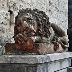 The lion sleeps (mikael_on_flickr) Tags: thelionsleeps sleepinglion leoneaddormentato lion leone løve löwe sleeping dormendo assisi umbria statua statue scultura sculpture skulptur