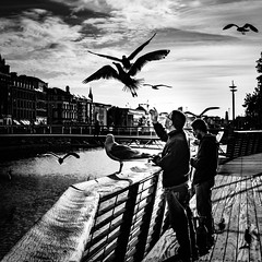 Believe (Kieron Ellis) Tags: seagull birds men man river liffey bridge flight candid blackandwhite blackwhite street