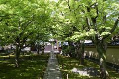 黄梅院 Oubai-in Temple (ELCAN KE-7A) Tags: 日本 japan 京都 kyoto 大徳寺 daitokuji temple 新緑 fresh greenery ペンタックス pentax k3ⅱ 2018 黄梅院 oubaiin