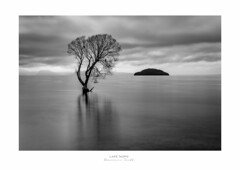 All By Myself - Taupo New Zealand (Dominic Scott Photography) Tags: dominicscott laketaupo taupo lake lonetree willow monochrome blackandwhite newzealand northisland sony ilce7rm3 a7rm3 a7rmiii gmaster sel2470gm manfrotto leefilters leeirnd