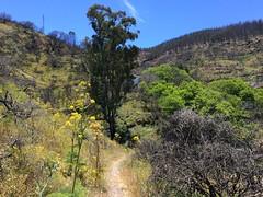 Senderismo Ruta desde Pico de las Nieves a Cueva Grande Gran Canaria  14 (Rafael Gomez - http://micamara.es) Tags: senderismo ruta desde pico de las nieves cueva grande gran canaria